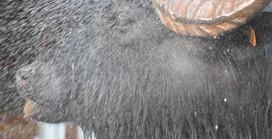 Un buffle d'eau sous la douche!