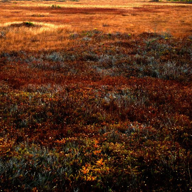 Maine Landcscapes #15