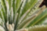 Estilo Excusive Gardens Vilamoura Portugal