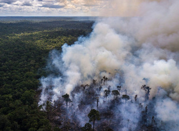 Is leather causing the destruction of the Amazon rainforest?
