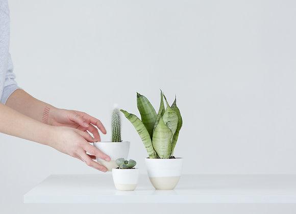 Flower pot for succulents - simple