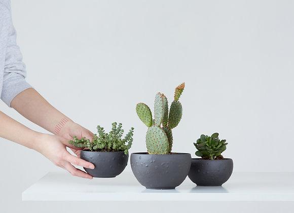 Flower pot for succulents - bubbles