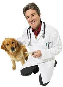 Clinica veterinária 24 horas