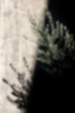 samuel-zeller-413062-unsplash.jpg