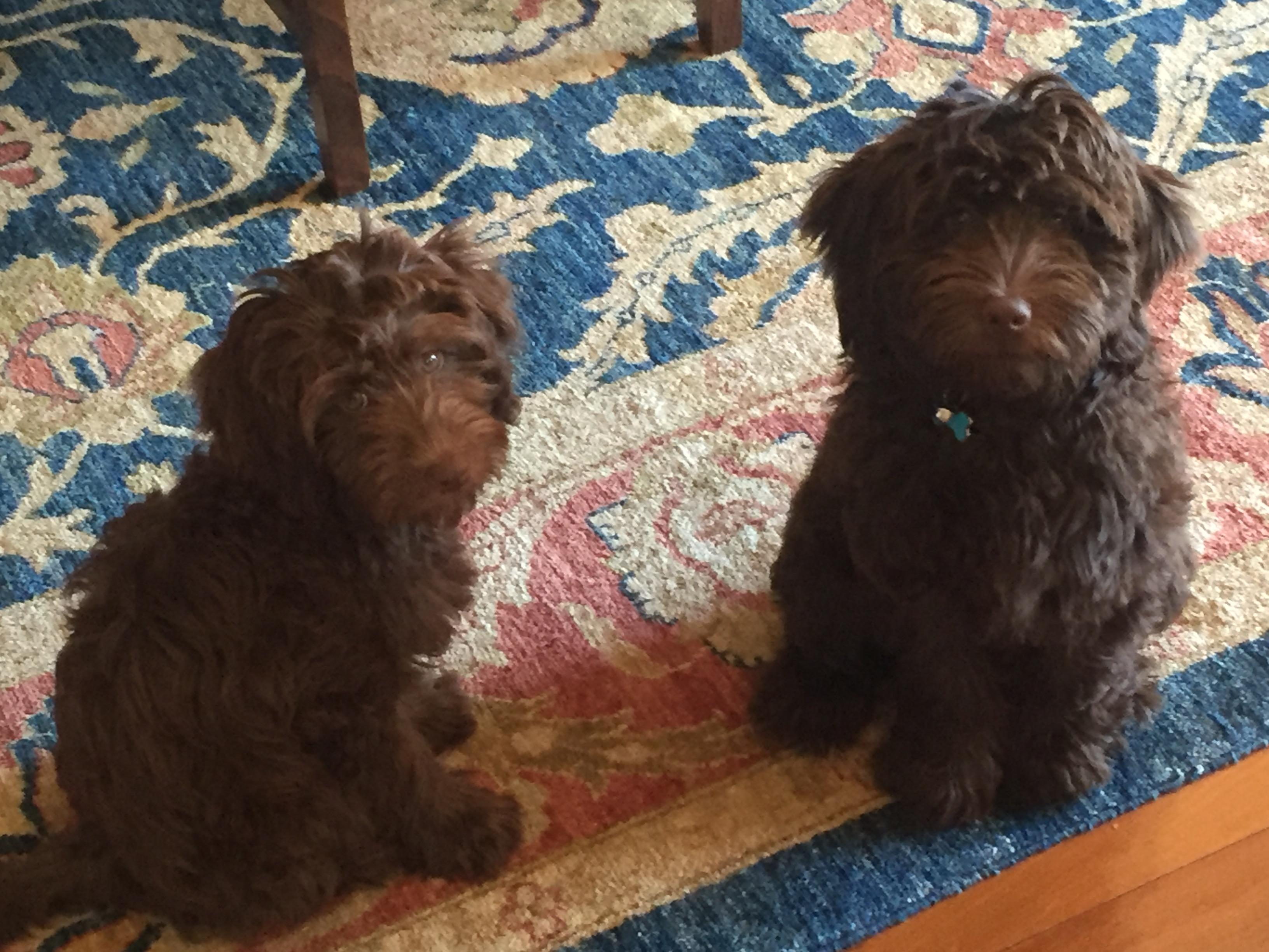 Harry & Willow WA