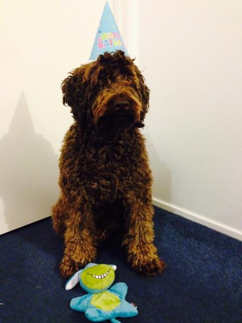Fudge turns 4!