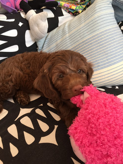 Lola in Syd
