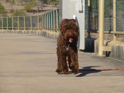 Charley in Townsville