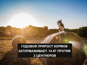 ГОДОВОЙ ПРИРОСТ КОРМОВ ЗАТОРМАЖИВАЕТ. 14 КГ ПРОТИВ 2 ЦЕНТНЕРОВ