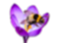 flower bee.png
