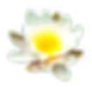 5-2-water-lily-free-png-image.png