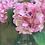 Thumbnail: Large Pink Hydrangeas (set of 4)