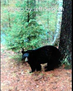 JS bear