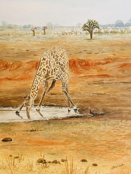 3 giraffe.JPG