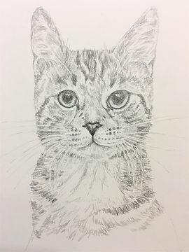4 cat.JPG