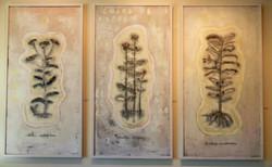 Pollinator Plant Series