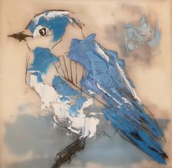 Here I Am (Female Mountain Bluebird)
