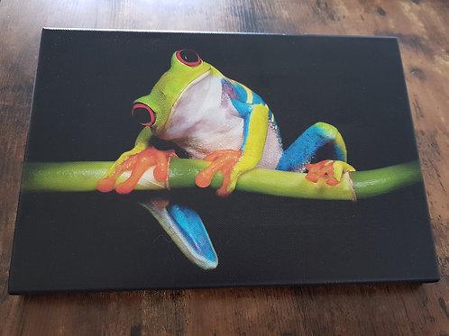 Bild Frosch