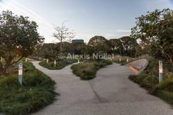 Tongva Park_LD-2957