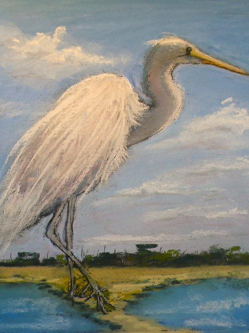 White Egret Study