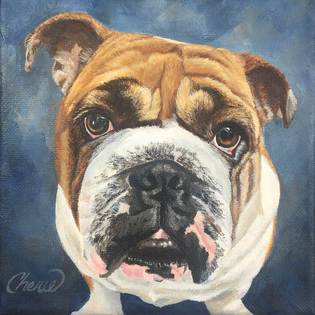 English Bulldog 6x6 in. canvas Pet Portrait Painting