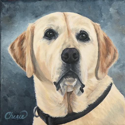 """""""Sunny"""" Labrador Retriever 6x6 pet portrait"""