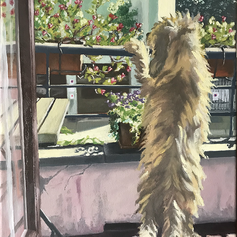 Il cane Ben al balcone