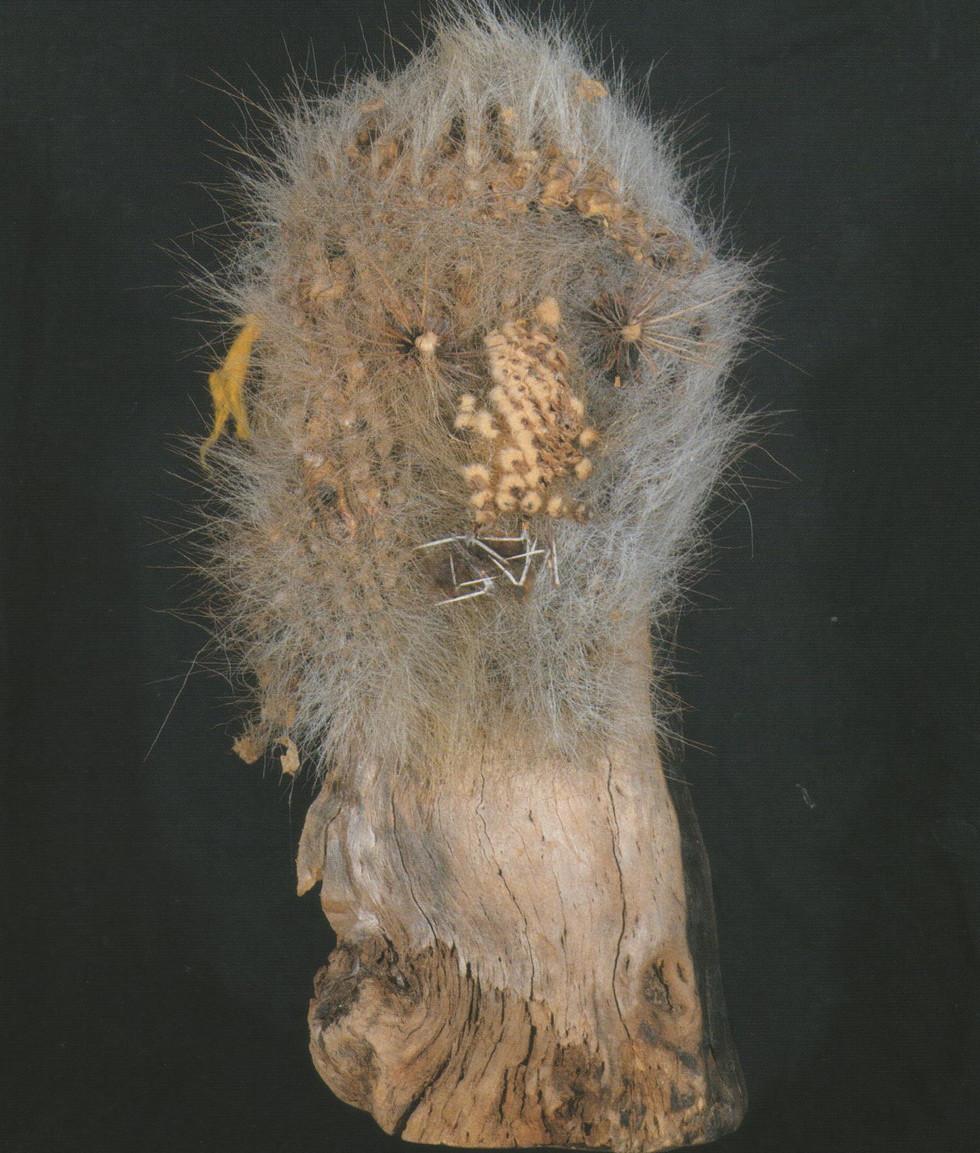 SOROCHE CACTUS