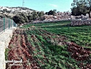 مزرعه للبيع مساحتها 4600م مع بيت في عجلون راس منيف