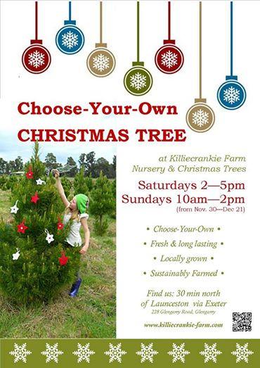 christmas tree open 2014.jpg
