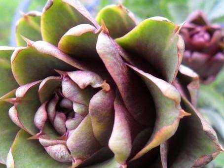 Edible Gardening - an Integrated approach
