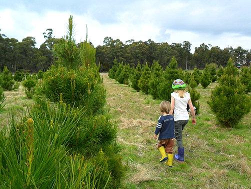 Tasmanian Christmas Trees