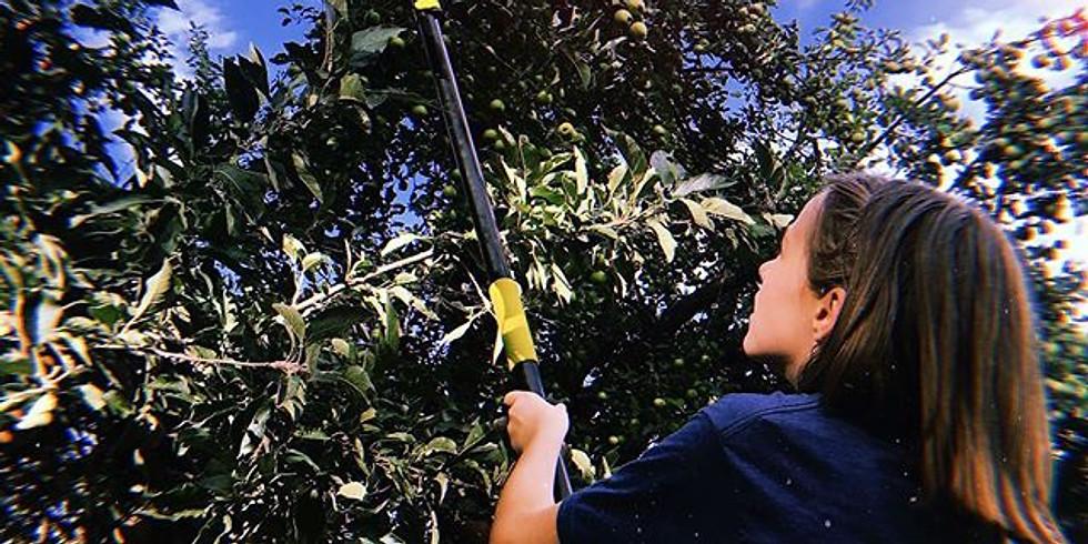 Apple Days Volunteering (October 5th)