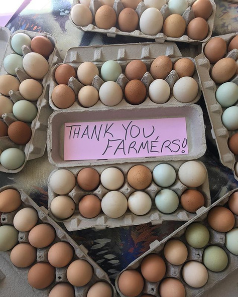 Farm Fresh Egg Donation