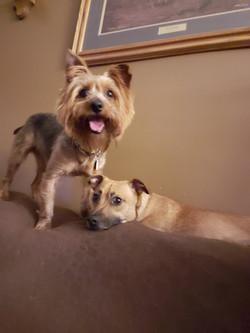 Cooper and Milo