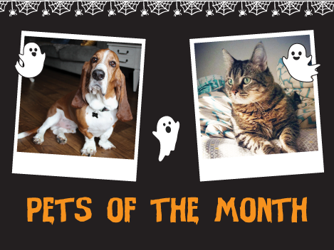 October Pets of The Month