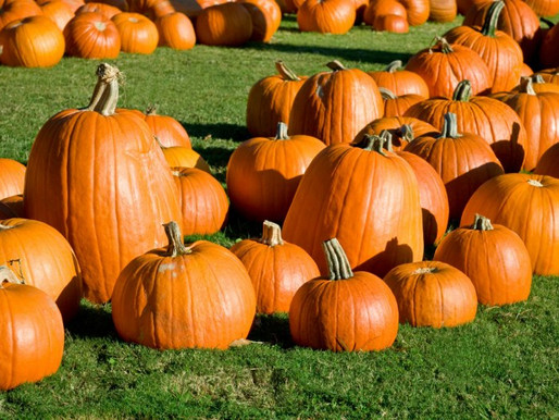 5 Things You Probably Didn't Know About Fall