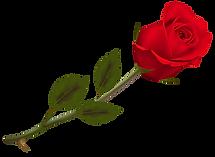 rose_PNG67004.png