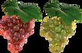 grape_PNG2966 web.png