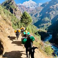 Jopkiyok, Everest Trek