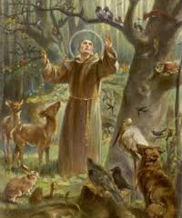 Take the St. Francis Pledge to Care for Creation and the Poor