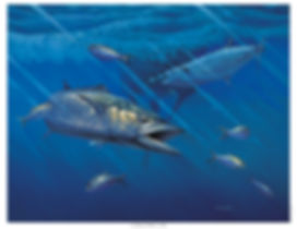 smoker king mackerel sea buoy painting