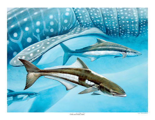 school of cobia and whale shark painting