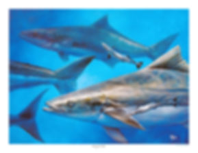 school of cobia painting