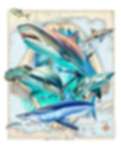 Gulf of Mexico sharks art poster