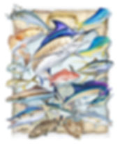 Gulf of Mexico fish art poster