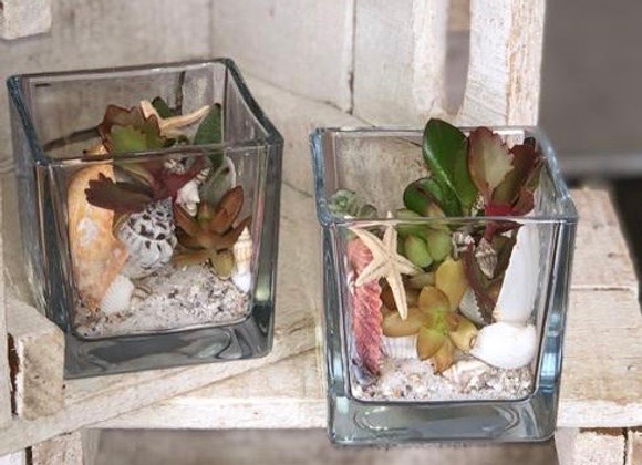 Glass cubes with succulents, shells and shingle (80 cms)