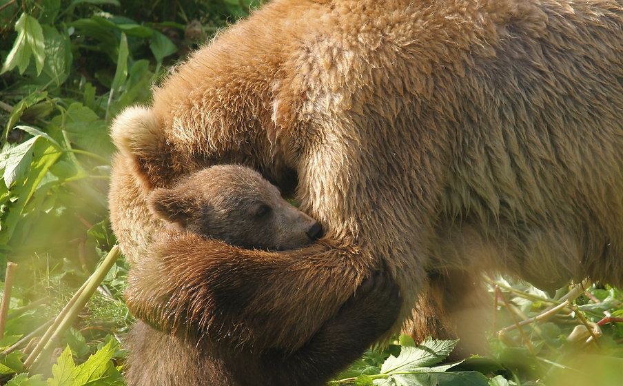 Kodiak%20Brown%20Bear%20with%20Cub.%20Mama%20giving%20a%20bear%20hug._edited.jpg