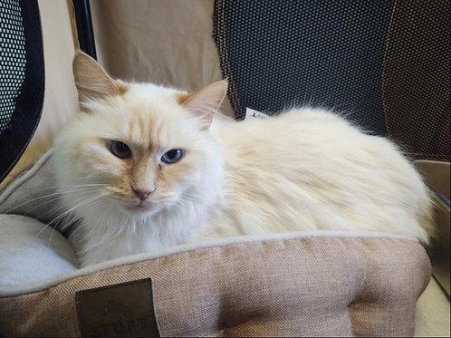 Cat Adoption Fee (5 years - 10 years)