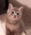 Casron_Gordon_Kitten.png